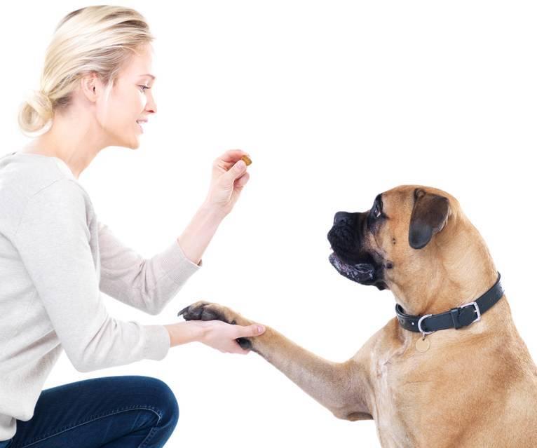 ¿Por qué quieres adiestrar a tu perro?