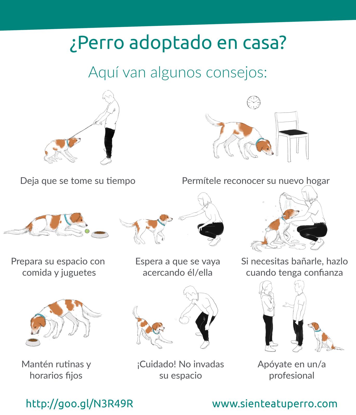 perro-adoptado-consejos