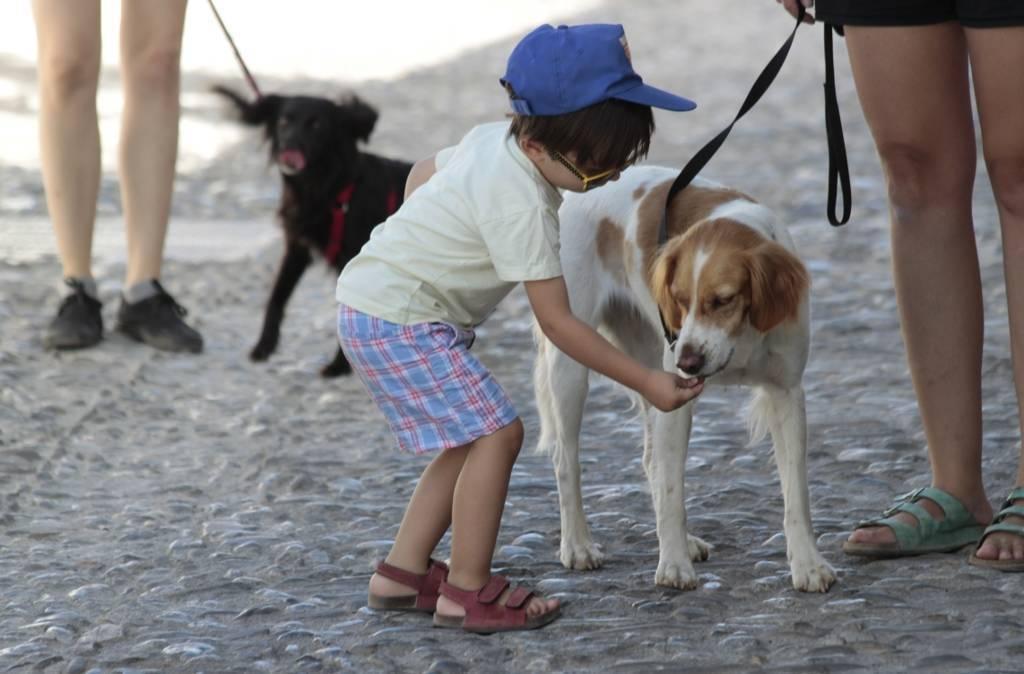 Niños, los pequeños entrenadores caninos