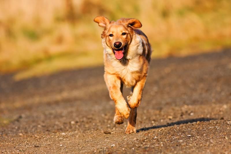 La motivación, el motor fundamental para trabajar con un perro