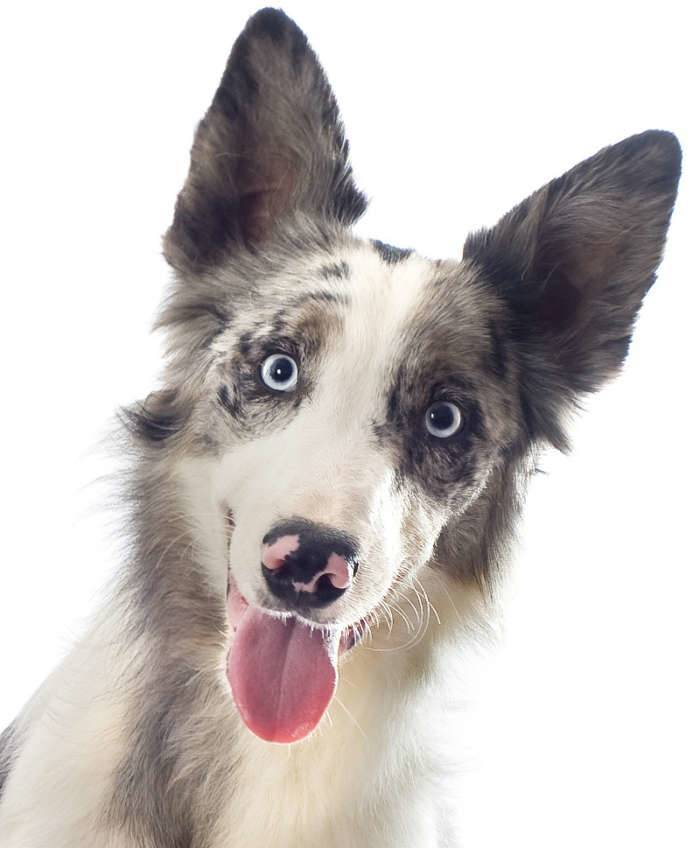 Recursos Educativos entrenamiento canino