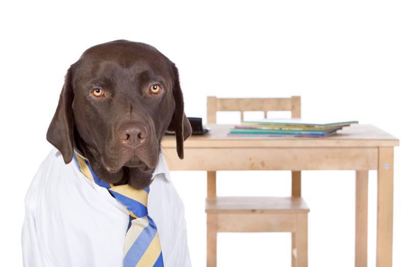 ¿Con qué podemos educar a un perro?