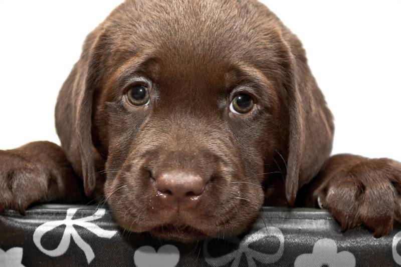 Tu primer perro, ese gran incomprendido