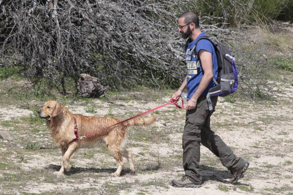 Toño y Maison - Salida de socialización canina