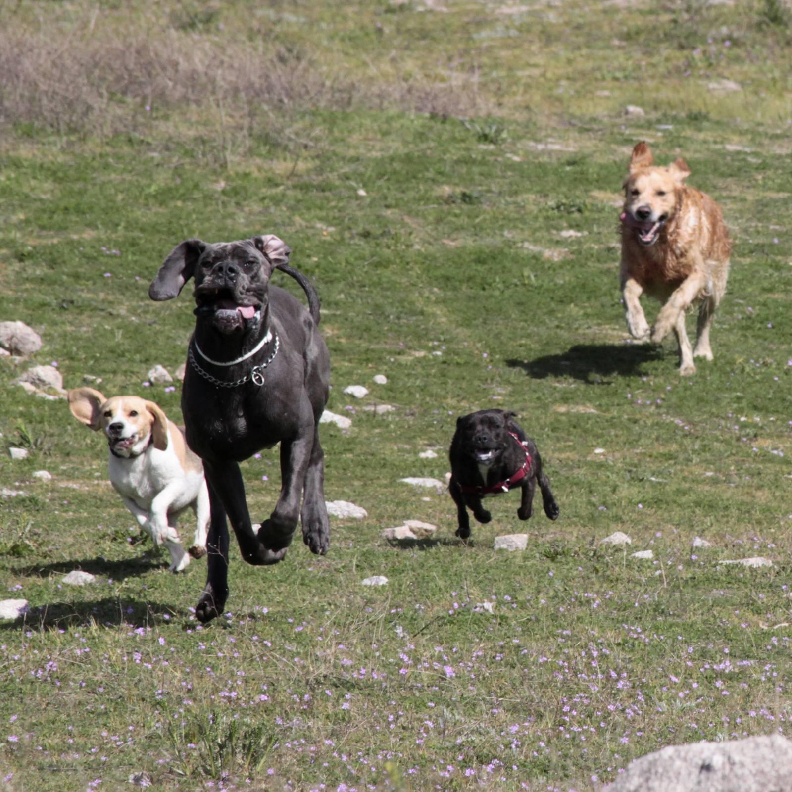Salida de socialización canina: abril 2015