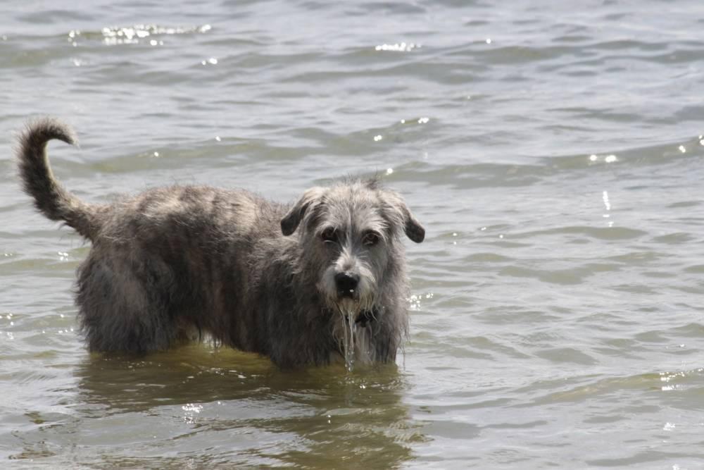 Noa a punto de zambullirse