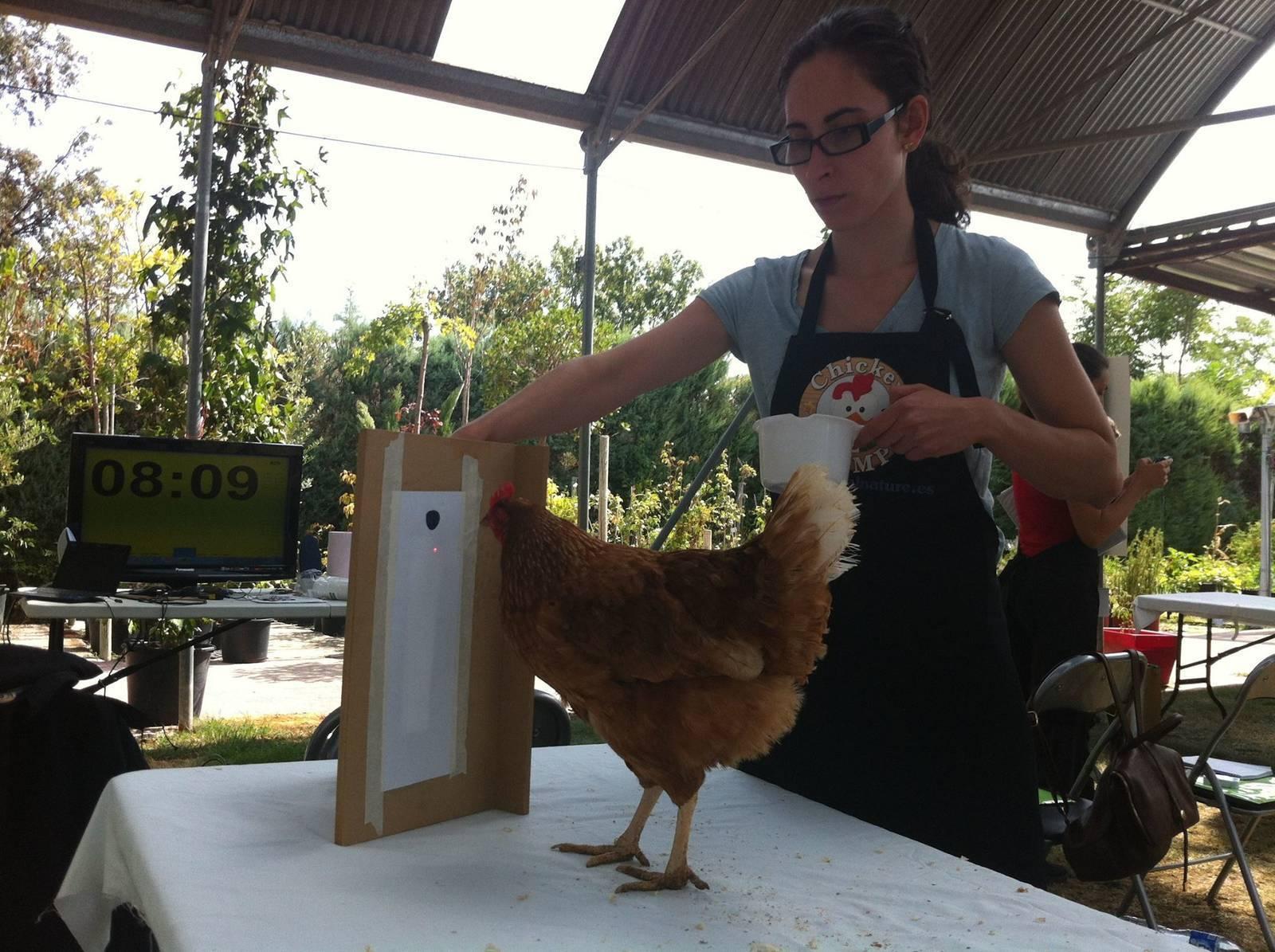 Chicken Camp nivel 2 - Animal Nature