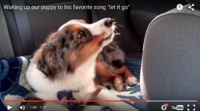 ¿Quién ha dicho que los perros no sienten la música?