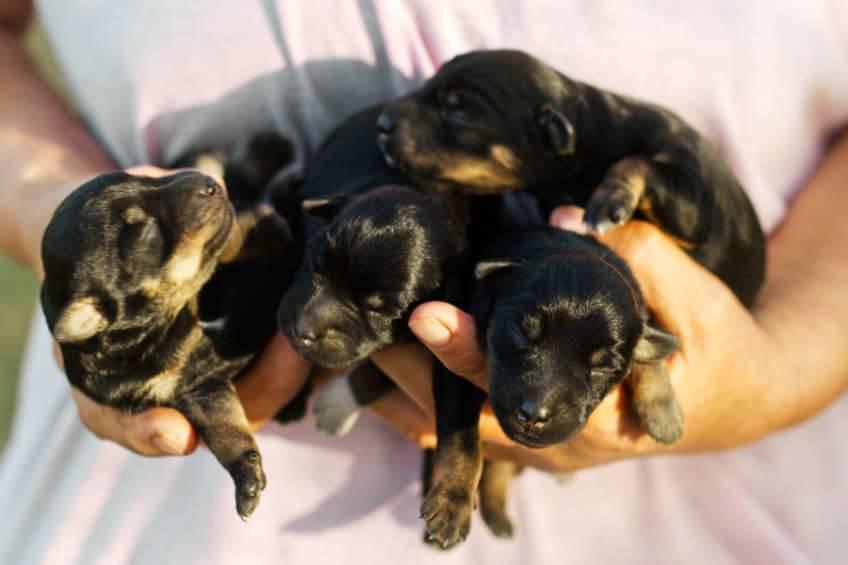Período Neonatal del cachorro