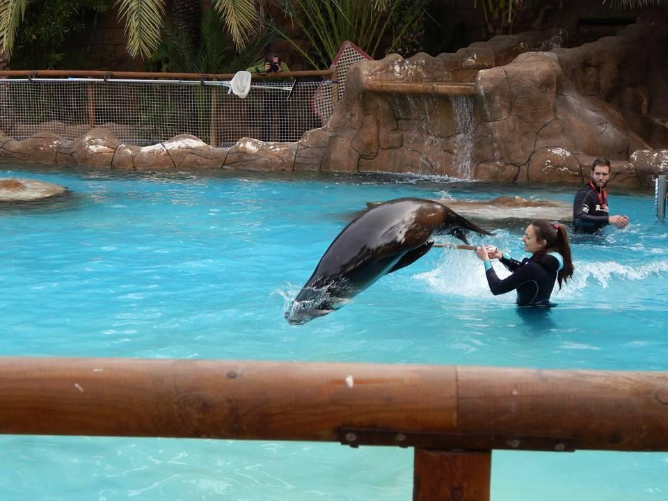 Conociendo a los leones marinos y mejorando el entrenamiento animal