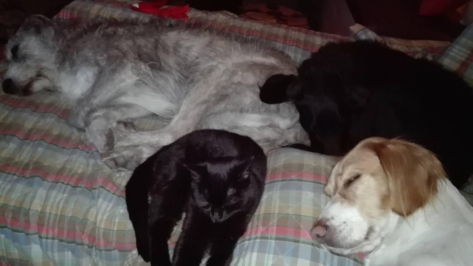 Las 4 peludas echándose la siesta juntas