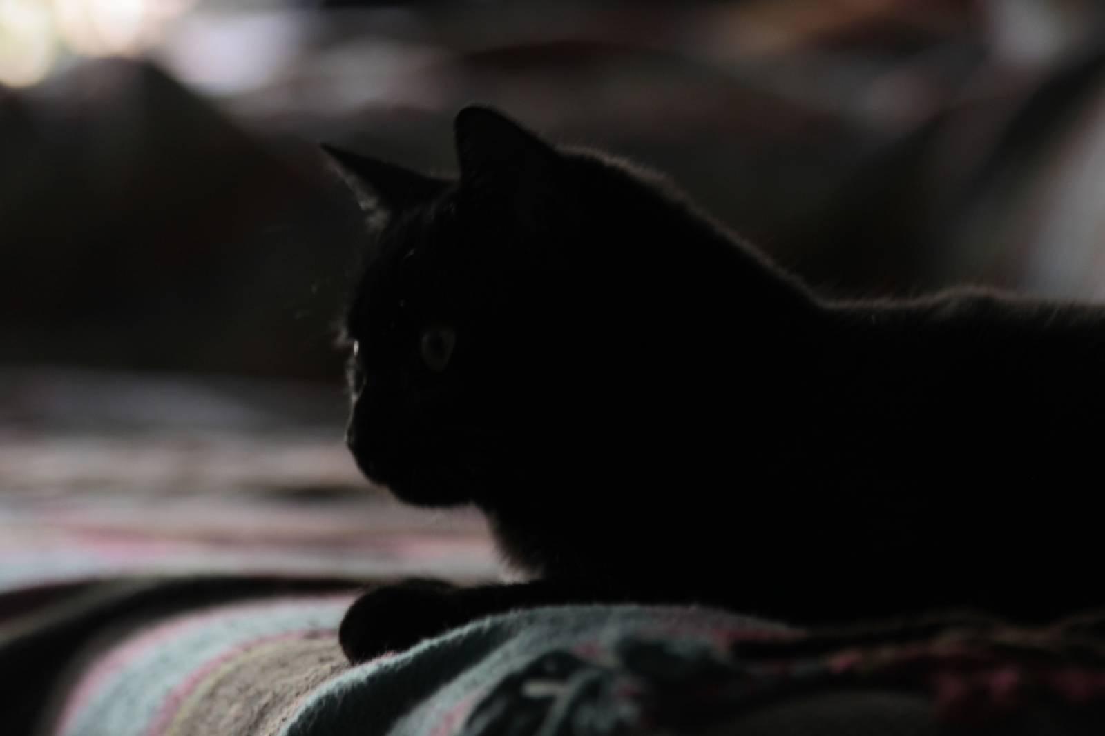 Una gata en la familia perruna