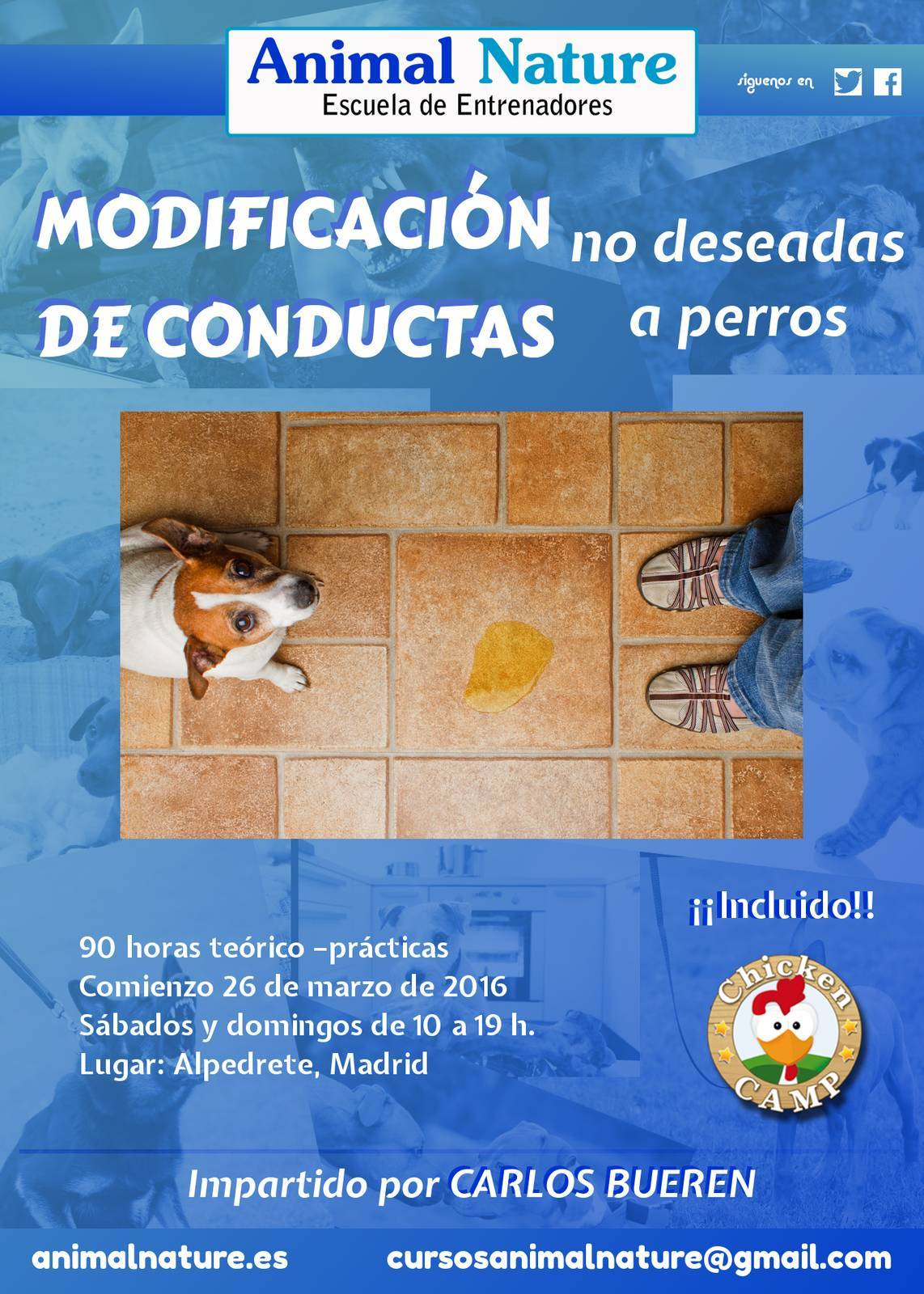Curso de modificación de conductas no deseadas a perros de Animal Nature