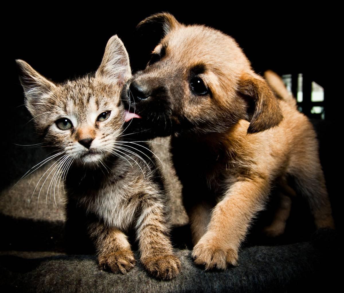 5 consejos para meter a un gato en una casa con perros