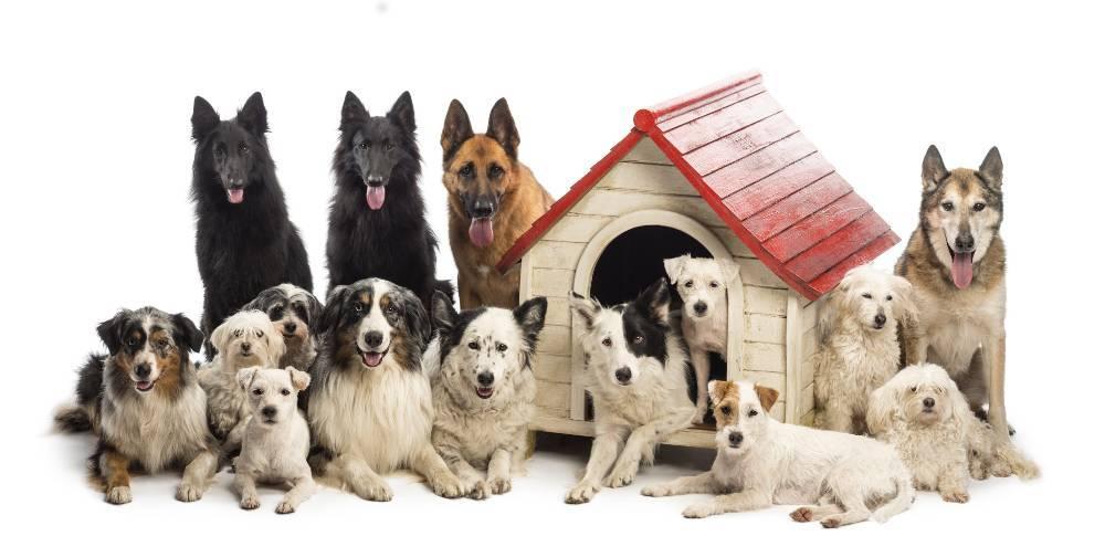 ¡Nos mudamos! ¿Que opinará mi perro?