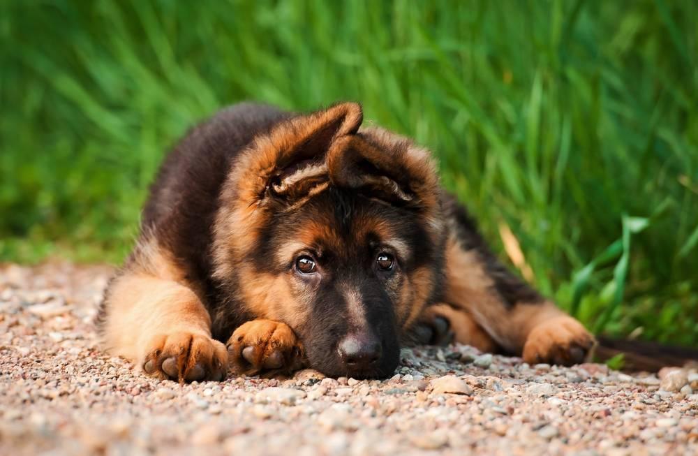 5 cosas que hacer con tu perro si te falta tiempo