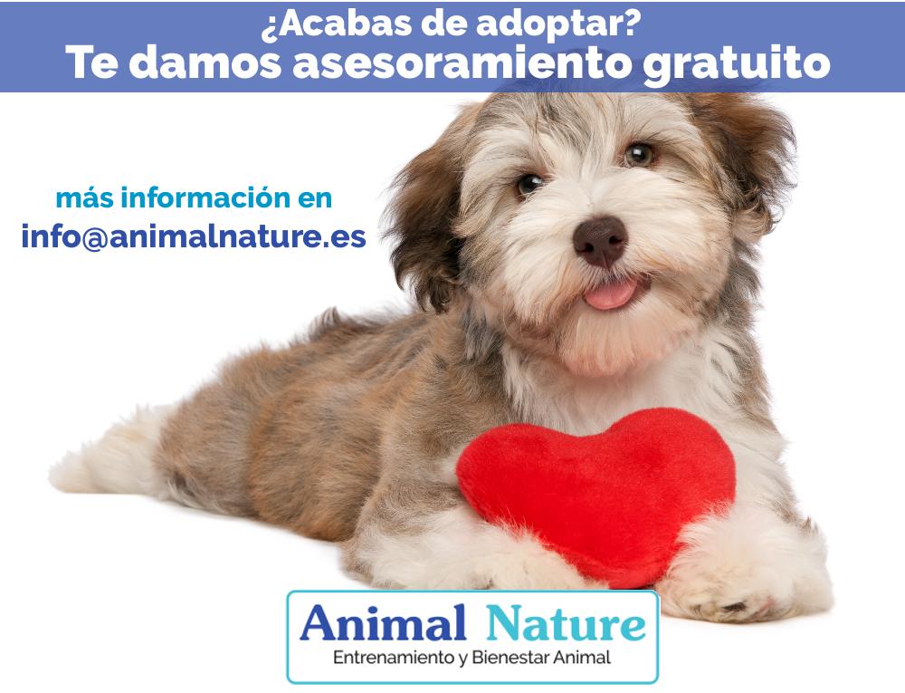 Asesoramiento gratuito de perros adoptados – octubre