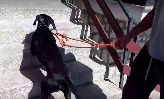 5 errores comunes cuando sacamos al perro