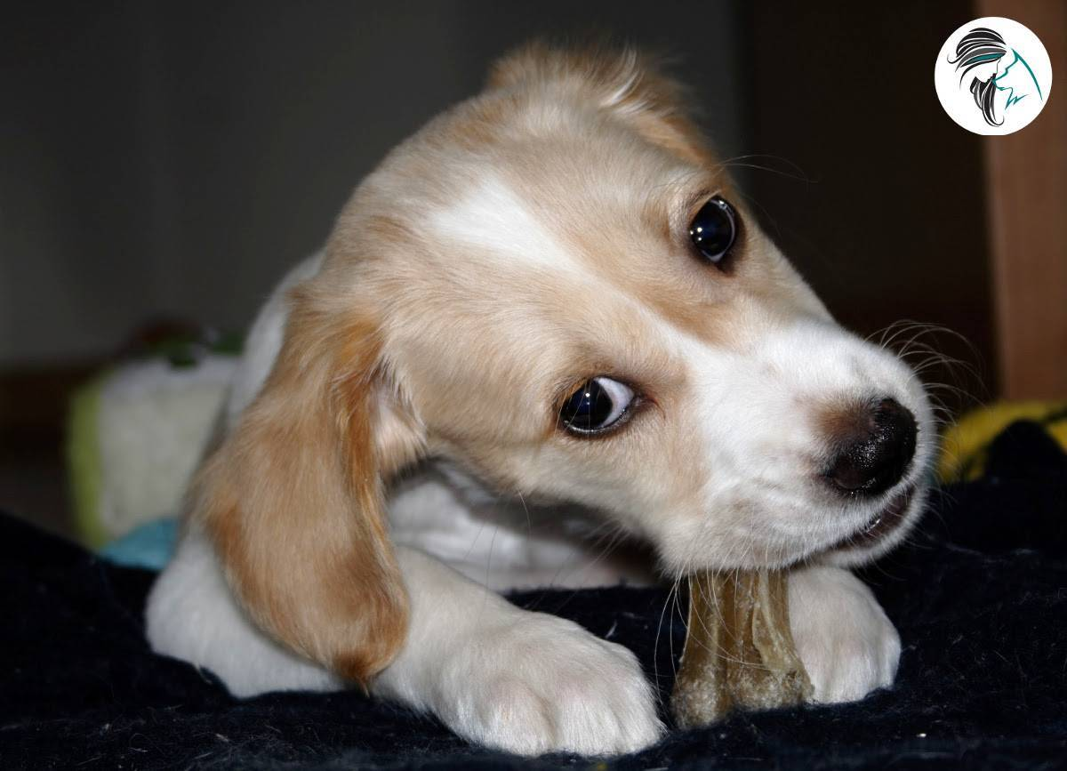 25 consejos para tener un cachorro en casa