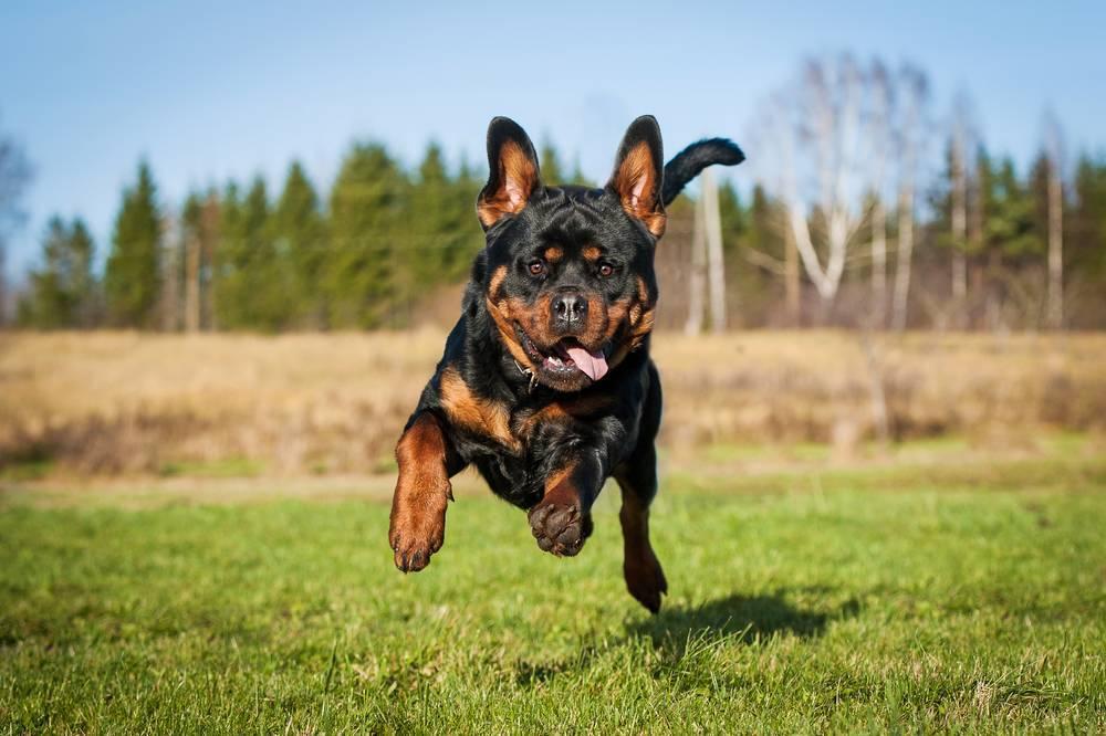5 errores comunes al llamar a tu perro