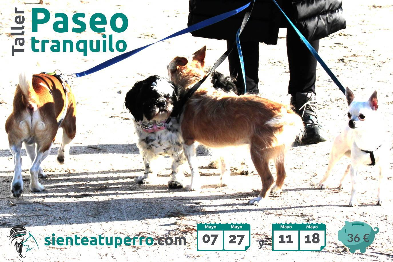 Taller Paseo tranquilo
