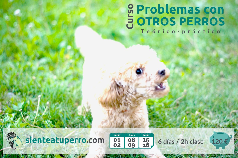 Problemas con otros perros (teórico)