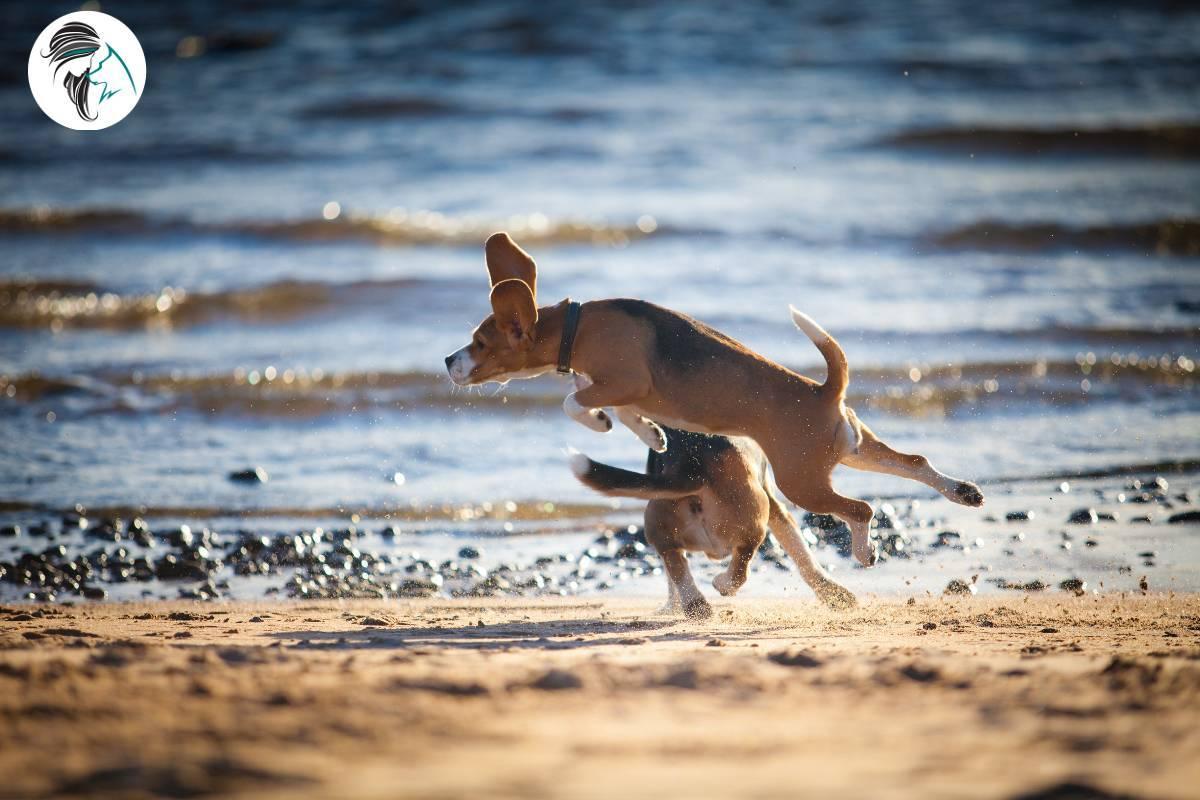 Perros jugando en la playa