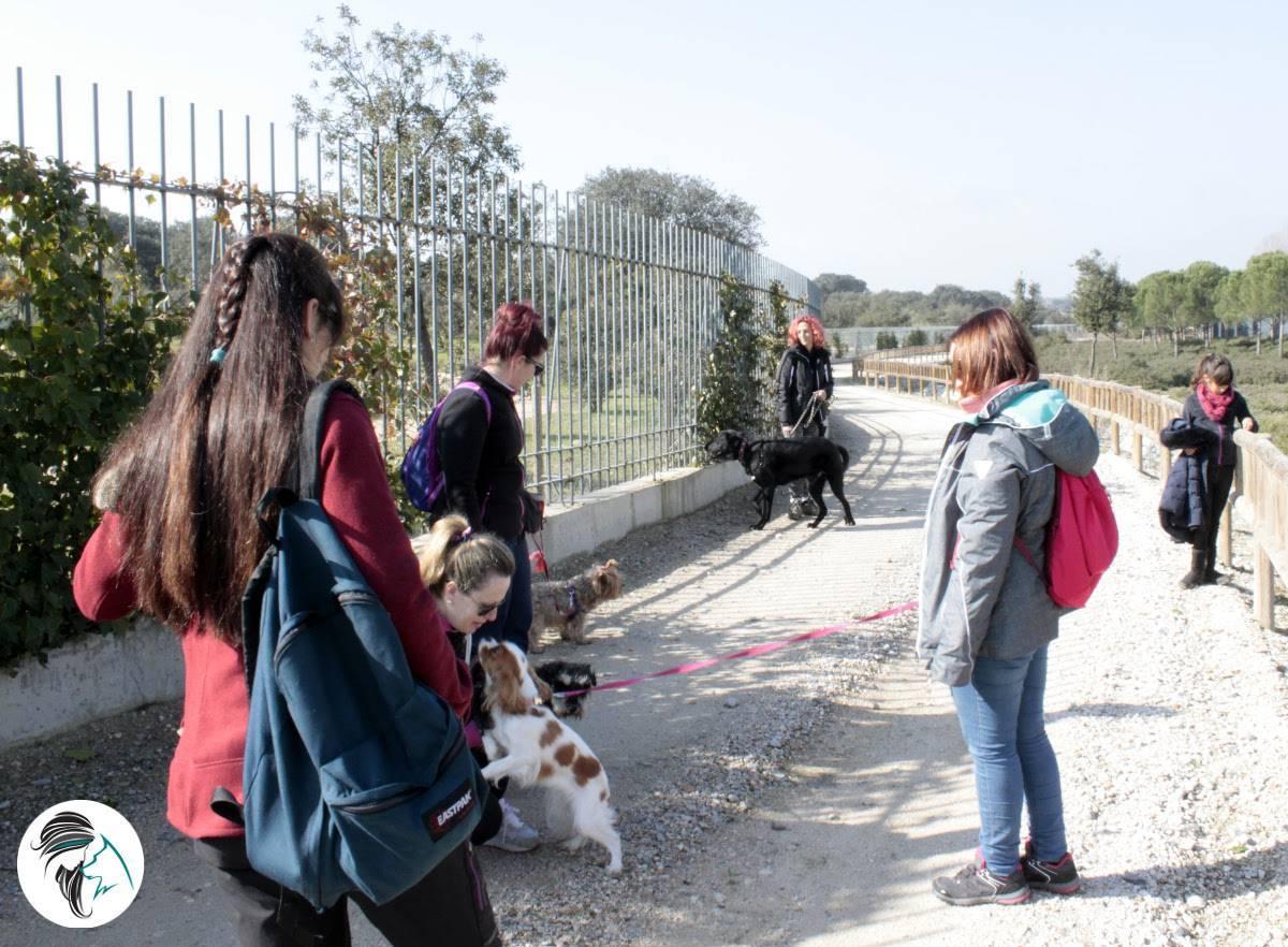 Salidas de socializacion canina