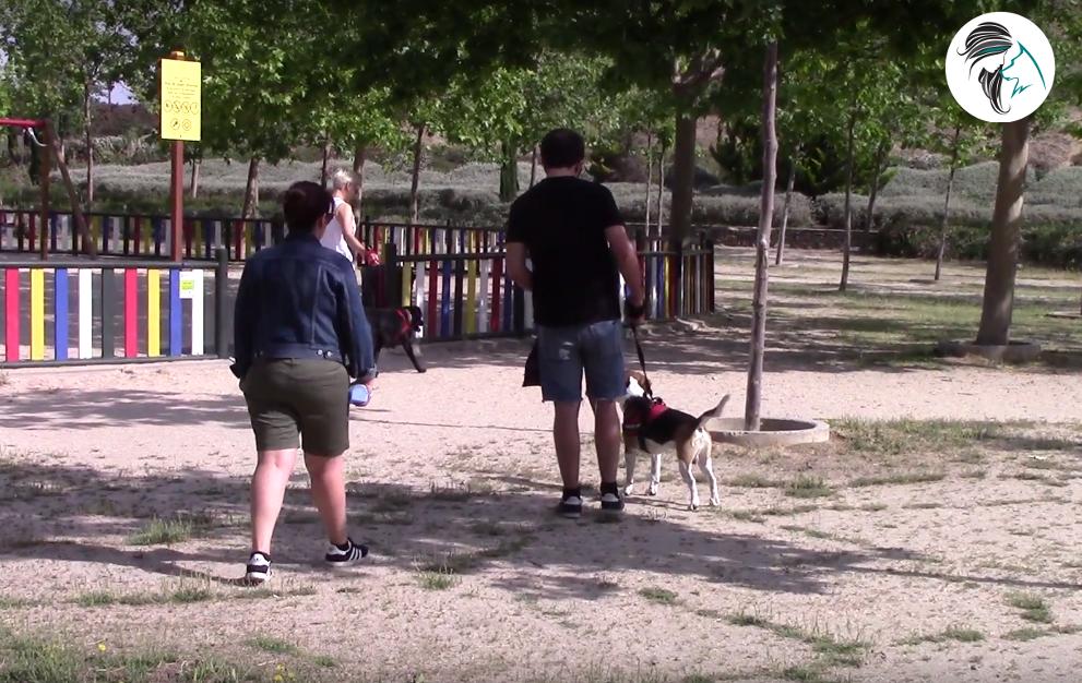 Paseo con el perro en el parque