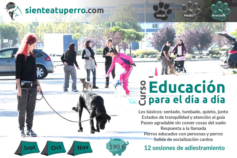 Curso de Educación canina para el día a día
