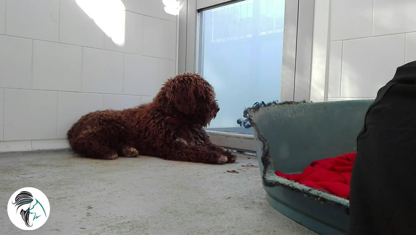 Comenzar con buen pie con un perro adoptado