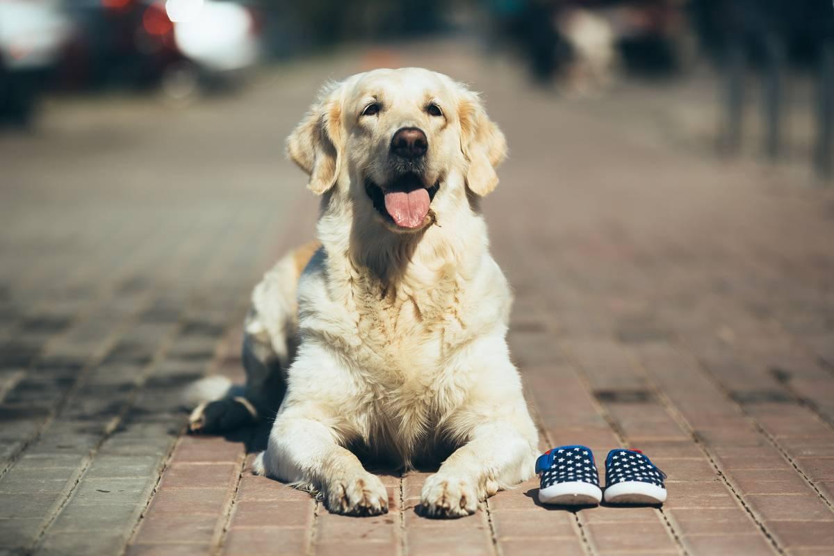 5 regalos para tu perro ¡GRATIS!