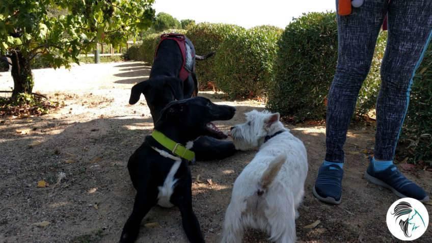 Salida de socialización canina - sept2017 - Boadilla del Monte, Madrid