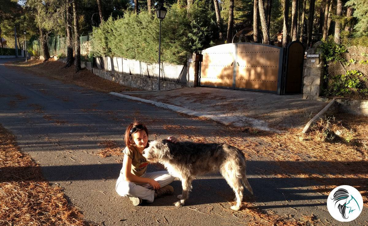 Adiestramiento canino cooperativo