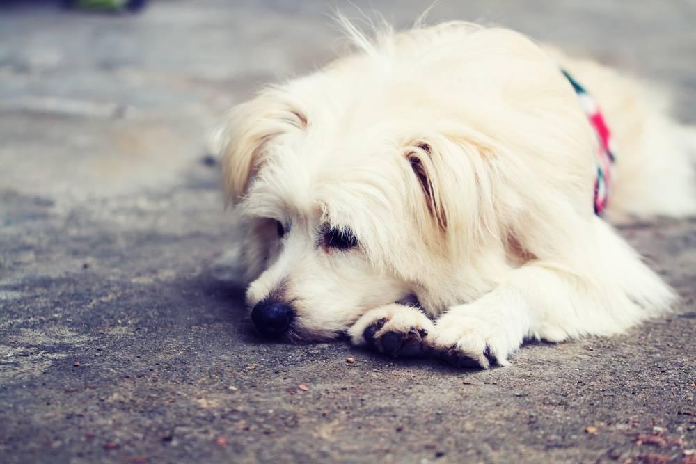 Perro solitario e incapaz