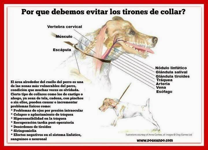 Perjuicios del tirón de correa en perros