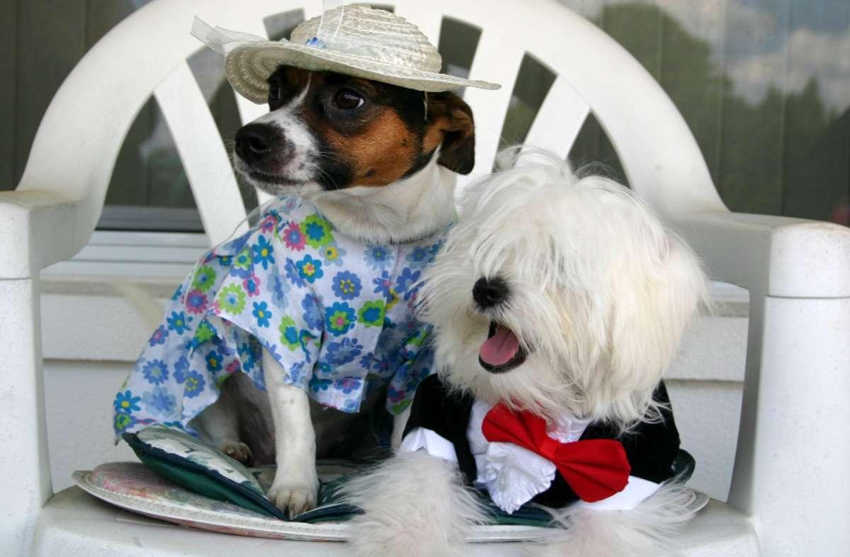 4 formas de humanizar a un perro
