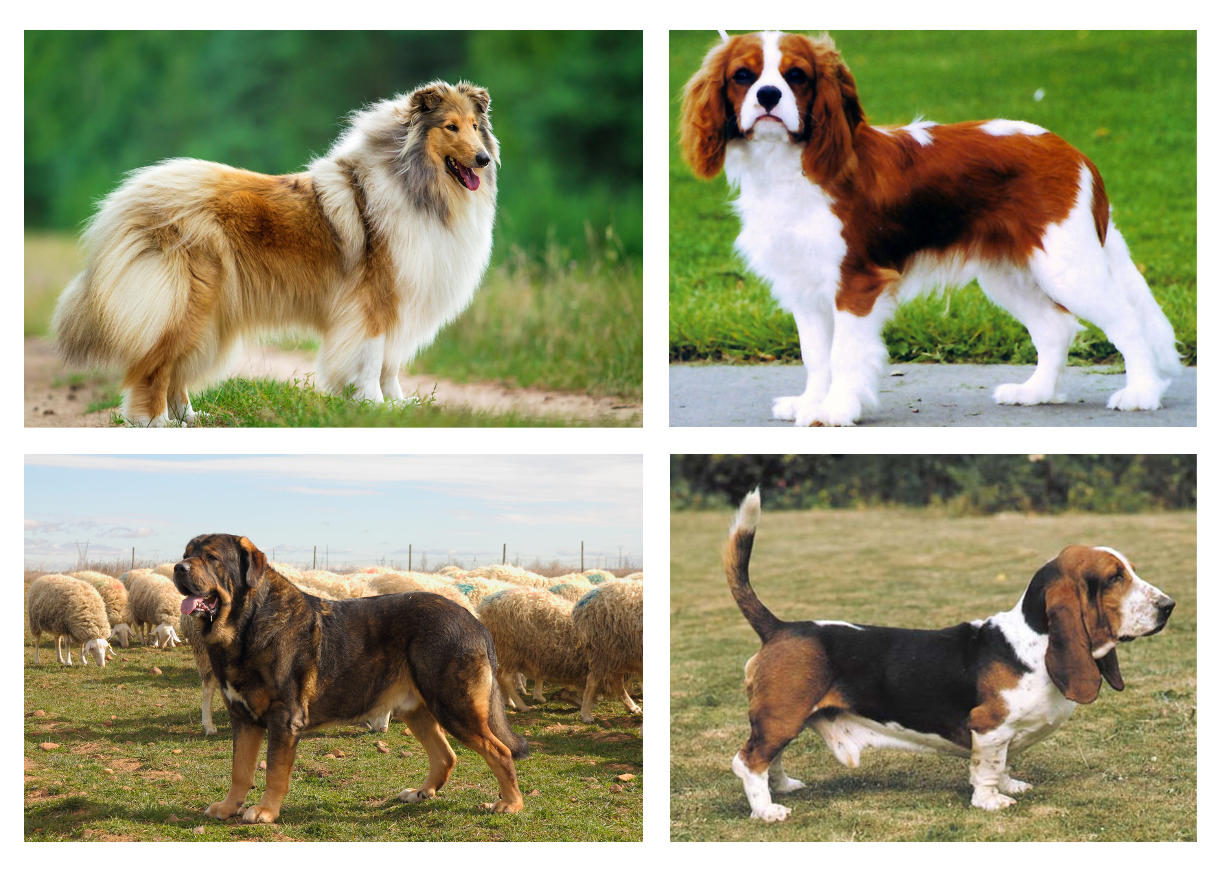 Perros en posición de alerta