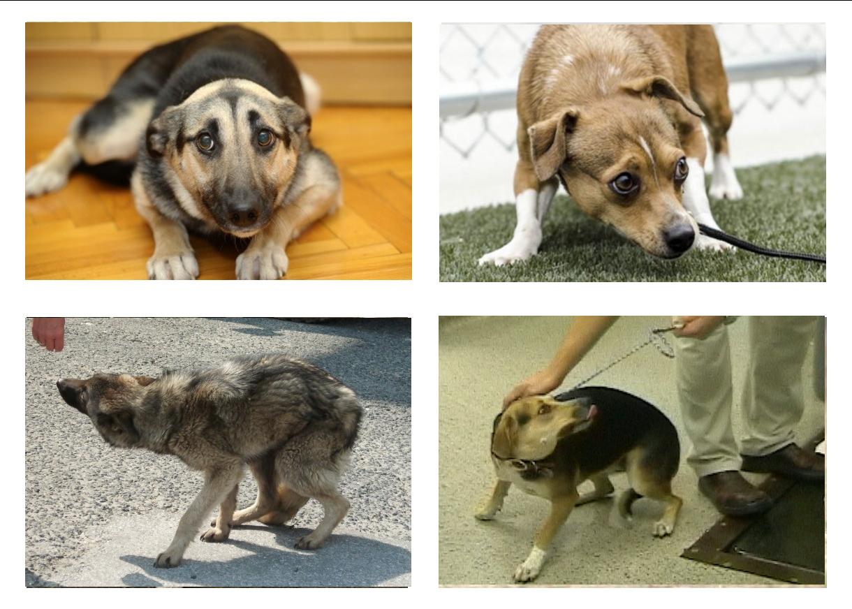 Perros en posición de miedo o inseguridad