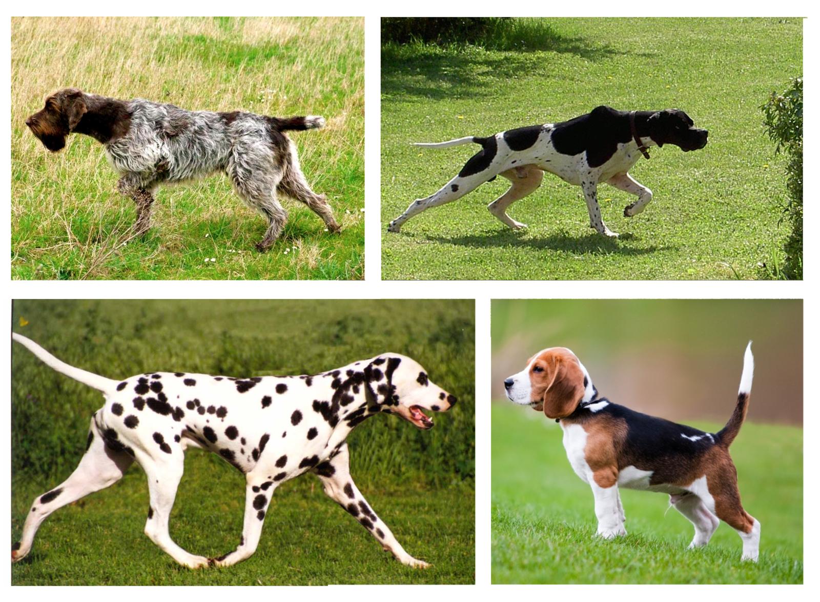 Posiciones de sospecha - comunicación canina