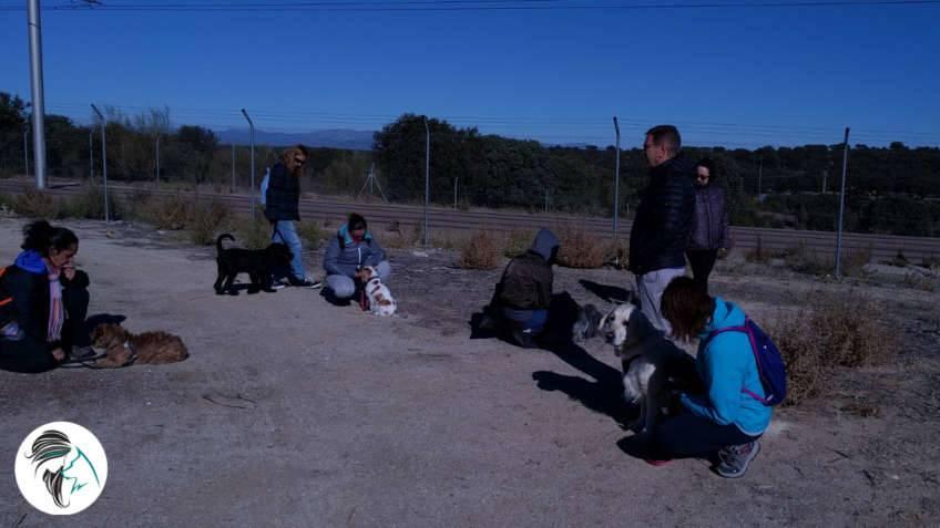 Salida de socializacion canina - nov17 - Siente a tu perro