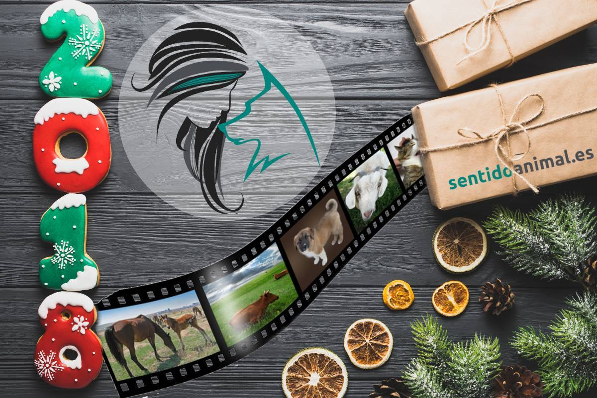 Año nuevo, proyecto nuevo: Sentido Animal