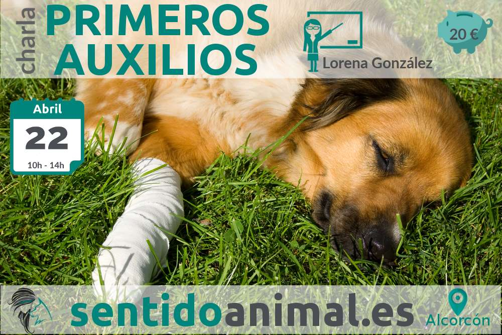 Charla: Primeros auxilios para perros