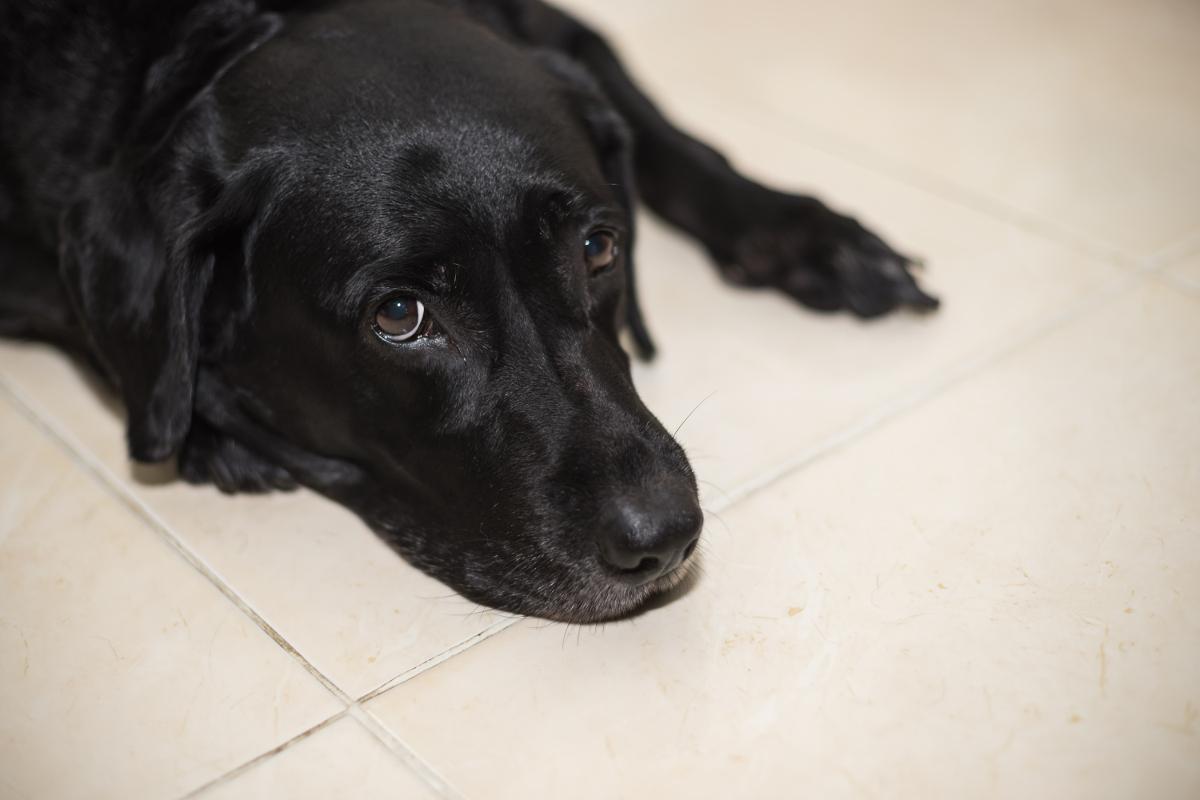 ¿Y si mi perro no es un perro de terapia?