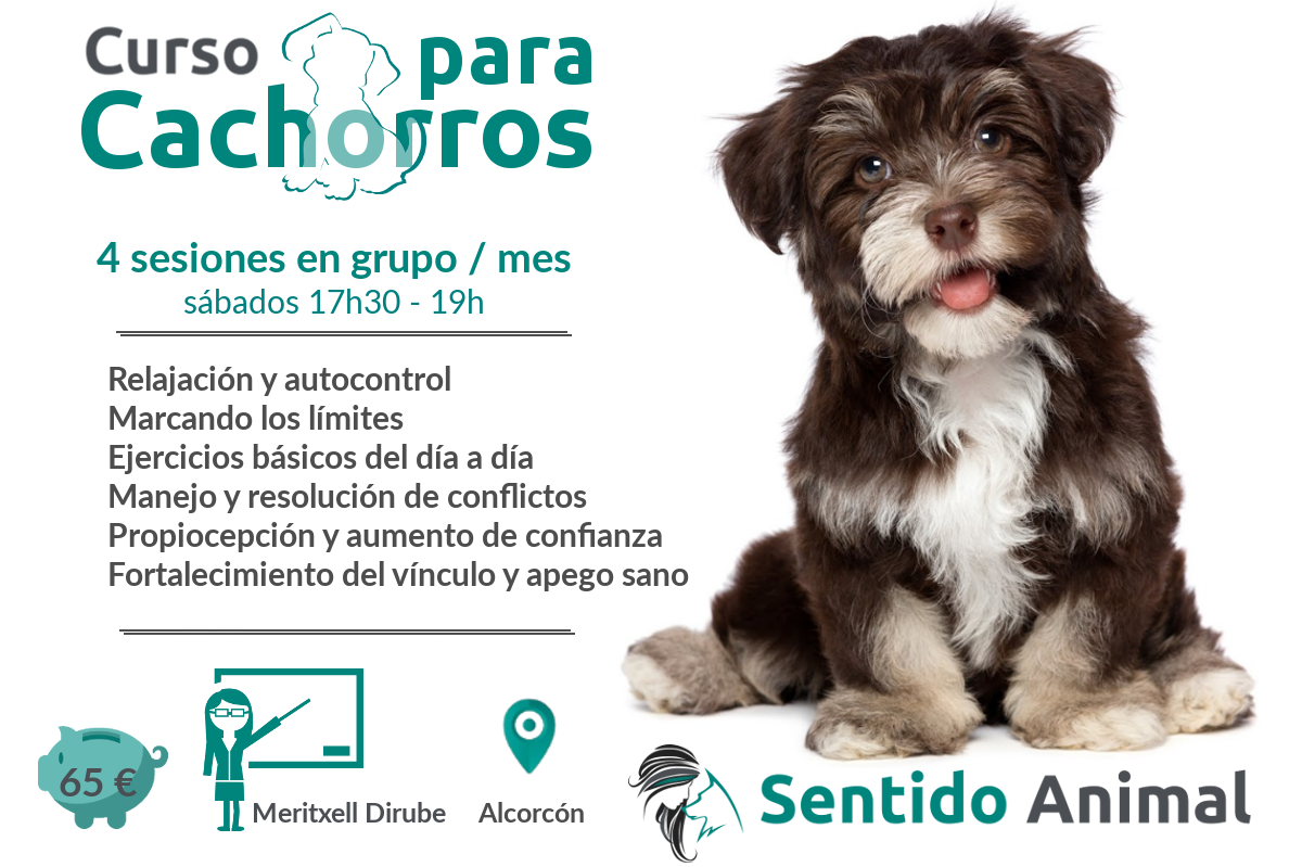 Clases grupales para cachorros – abril