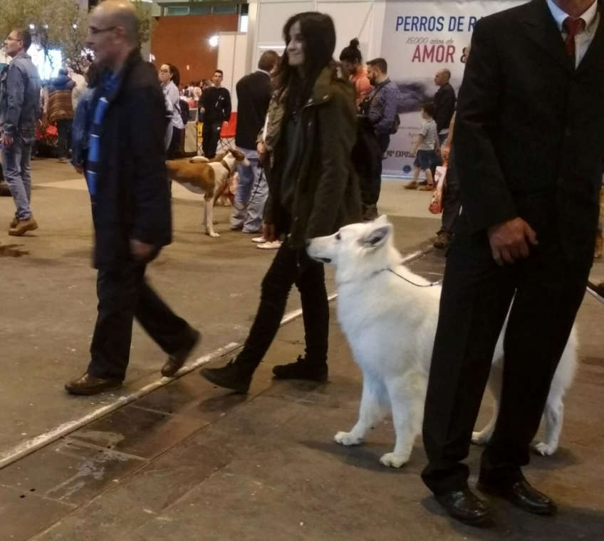 Feria 100x100 Mascota