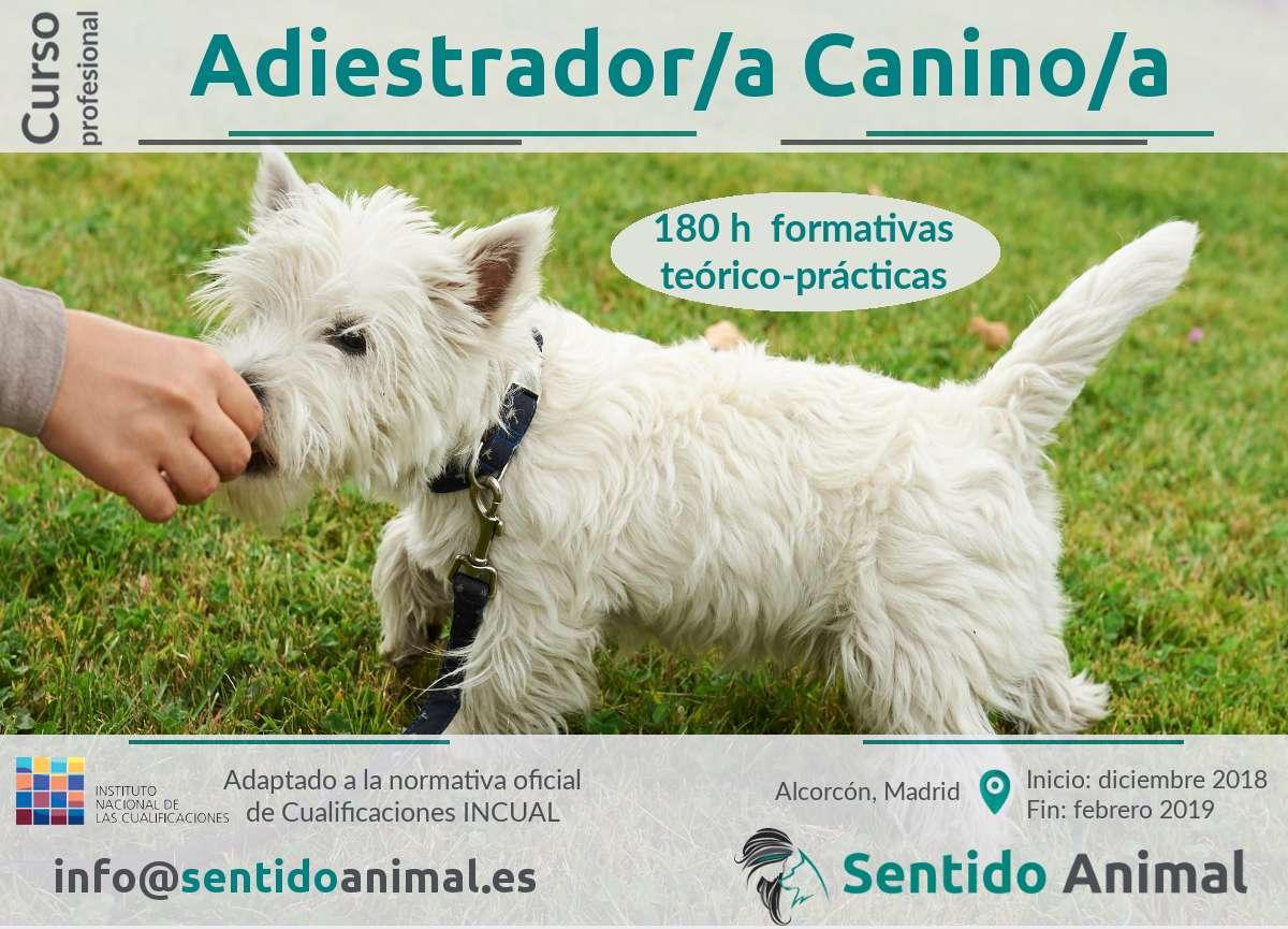 Curso profesional de adiestramiento canino