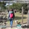 Socializacion canina Boadilla del Monte 2018-06-24