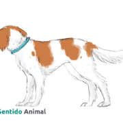 posición de evitación en el perro