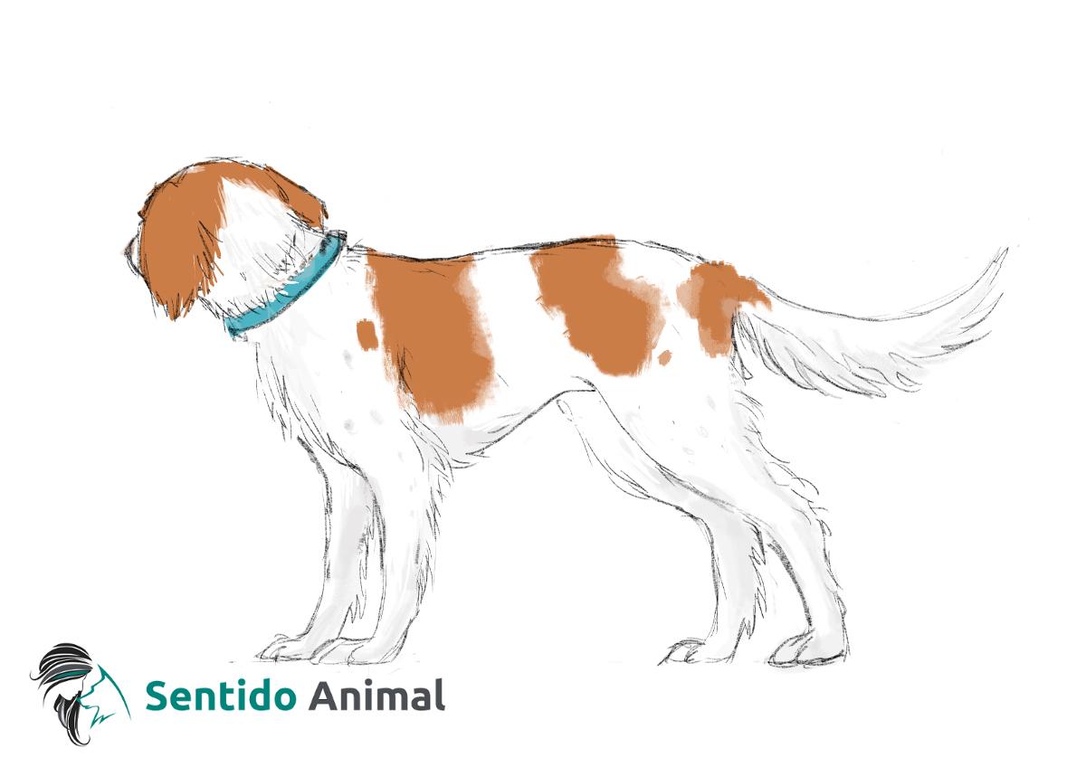 Posición de giro de cabeza – comunicación canina